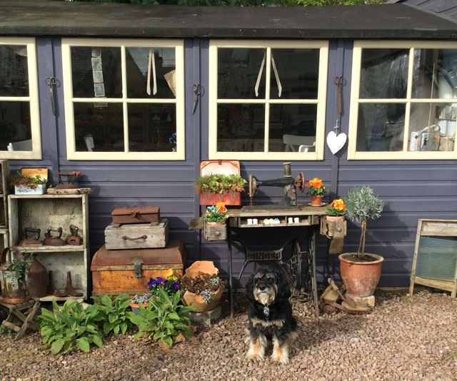 Annie the pooch outside The Thread Shed